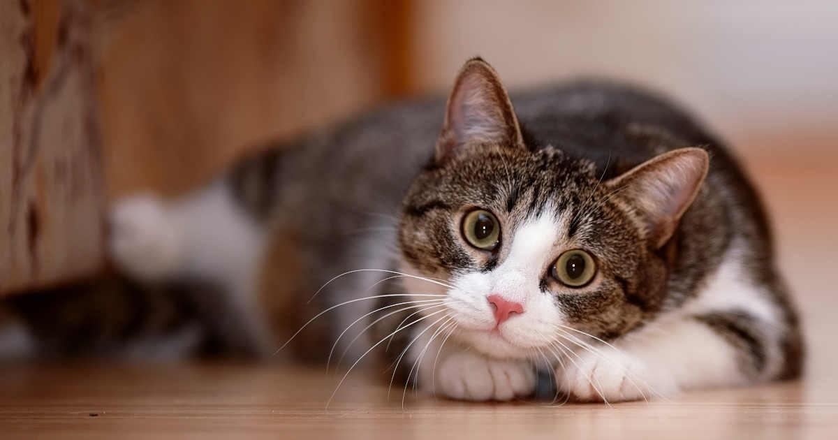 猫塾の画像 p1_32