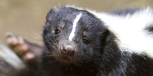 OMG, that's a truly awful smell; so don't frighten a skunk