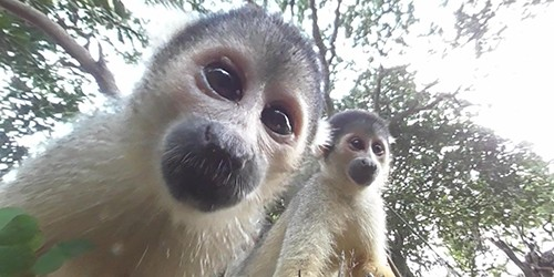 Christmas comes early for squirrel monkeys in Fukuoka