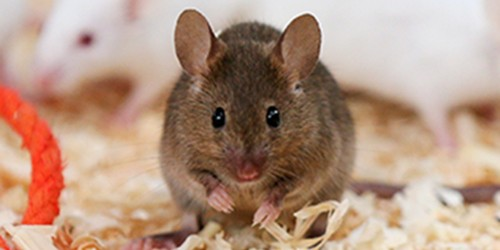House mouse steals the show at Yokohama's Nogeyama Zoo
