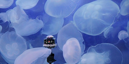 Curious creature from Tokyo Bay exudes relaxing vibe at aquarium