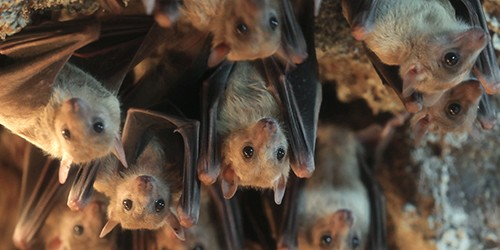 Bats may seem scary, but they actually look quite cute