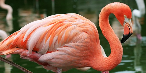 Experience being surrounded by a flamboyant flamingo army