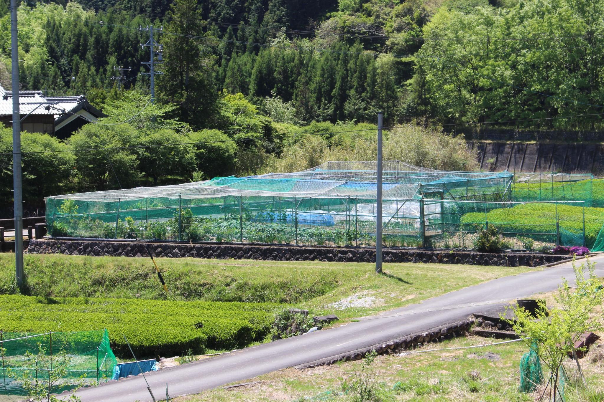 柵で厳重に囲われた農地=池滝和秀撮影