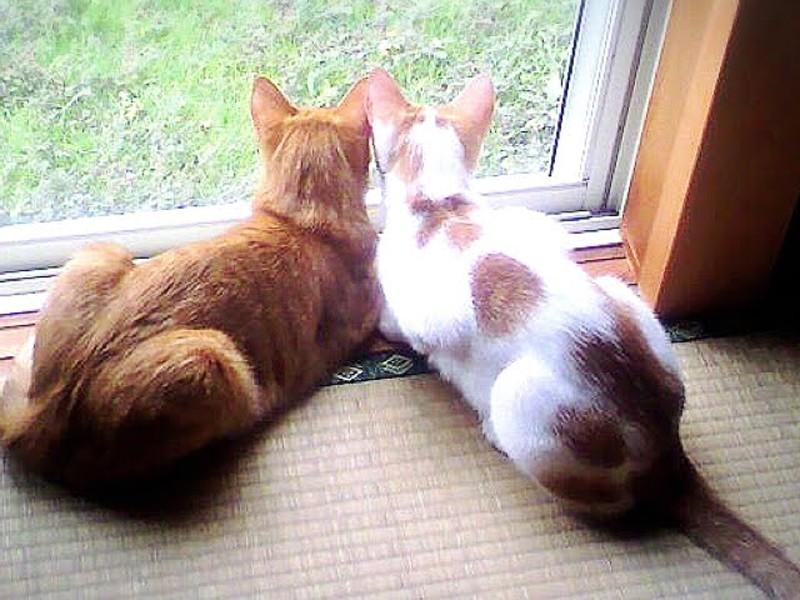 窓際の2匹の猫