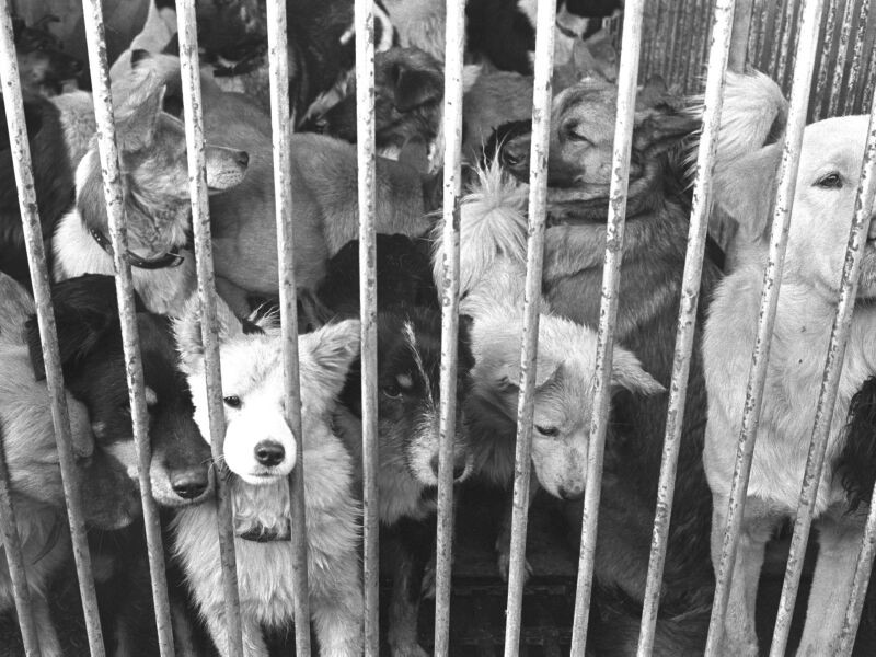 捕獲された犬たち