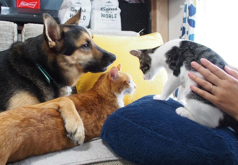 犬と猫2匹
