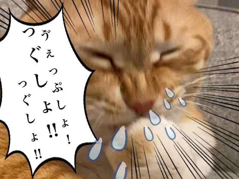 猫写真マンガ「グッピーのたぷたぷ日記」4コマ目