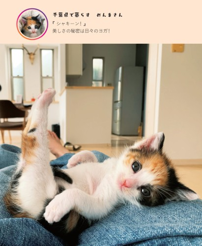 ねころがる子猫