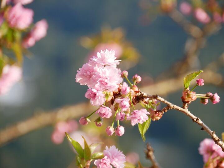 桜が散ったら、私は髪を切る。いじめの記憶を切り落とすように | かがみよかがみ