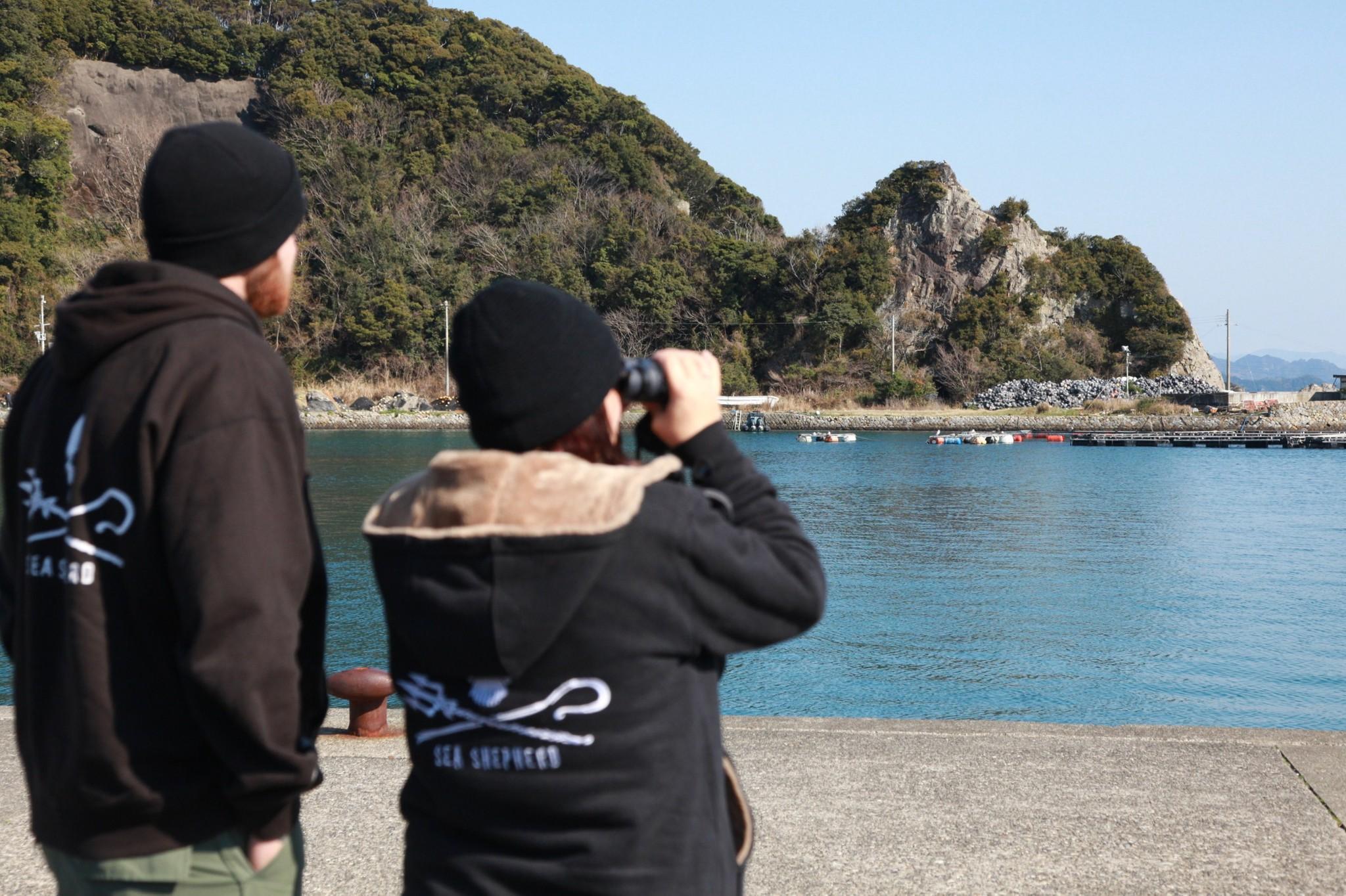 イルカが入っているいけすを見つめるシー・シェパードのメンバー=2014年3月、和歌山県太地町