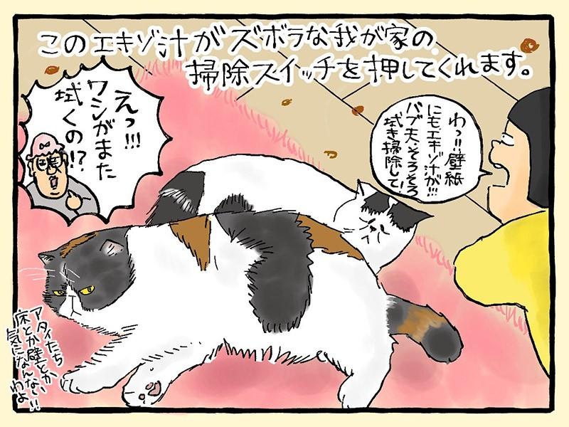 大盛のぞみ猫マンガ「やっぱ、猫じゃけぇ」