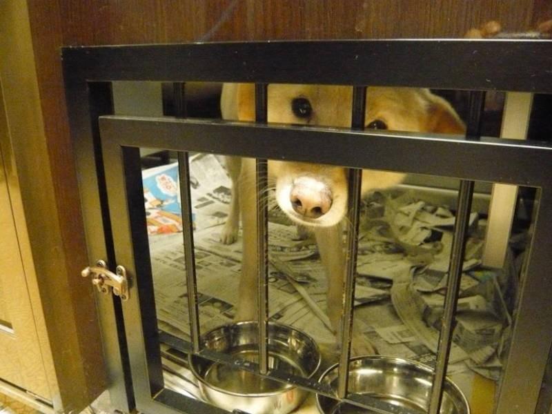 ケージの中の被災犬