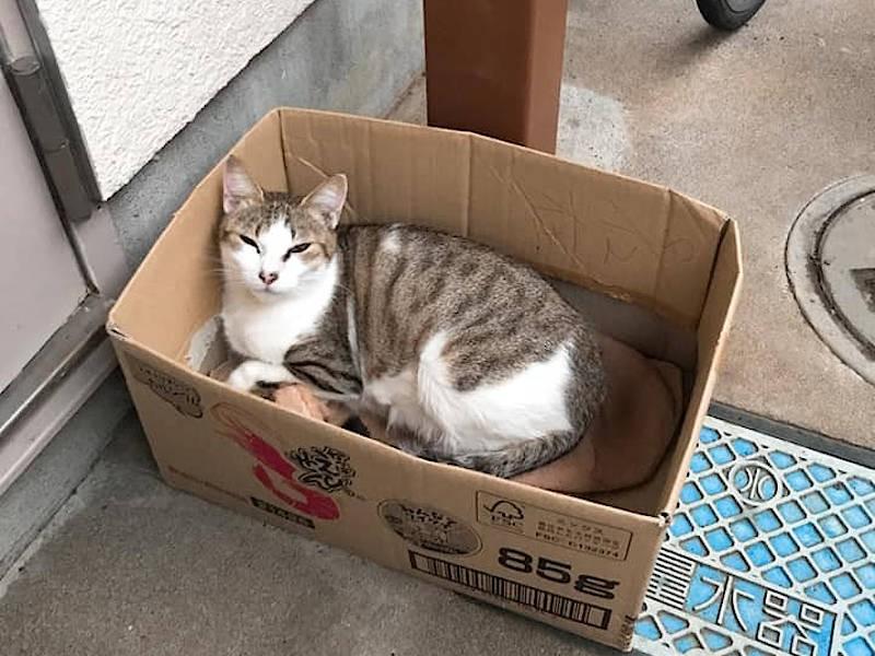 箱に入る野良猫