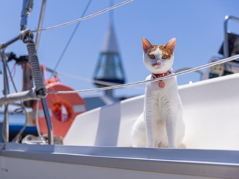 茶白猫「モモタン」