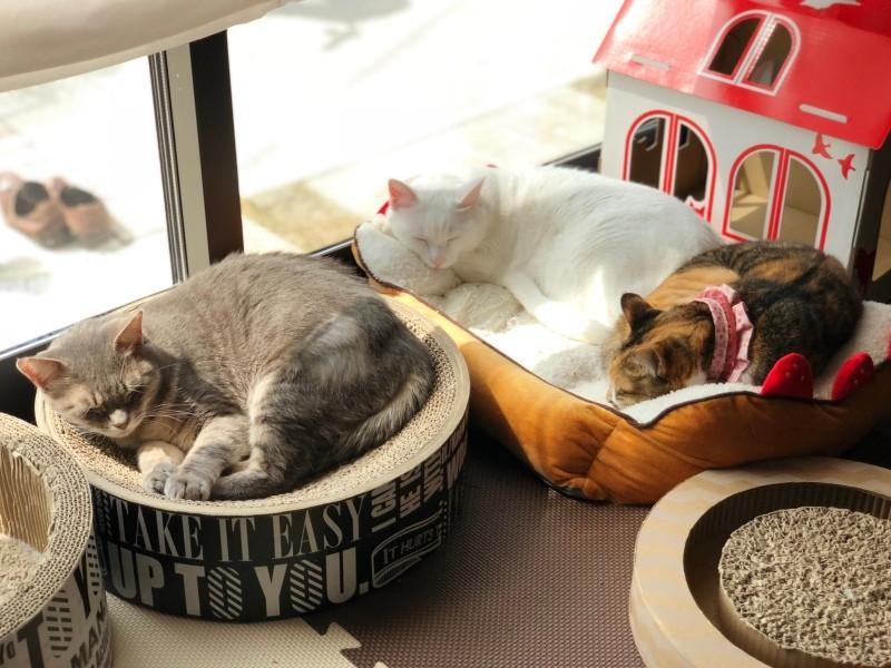 眠る3匹の猫