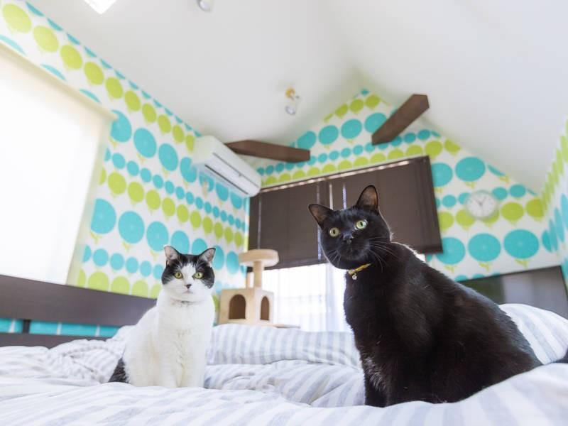 白黒猫「七味」(左)と黒猫「九兵衛」