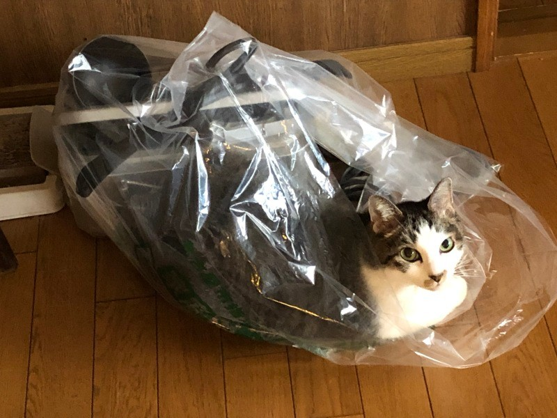 ごみ袋に入る猫