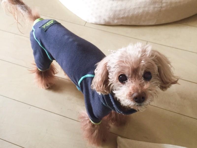 愛犬がリンパ腫に 闘う決意 病気になんか負けない Sippo シッポ