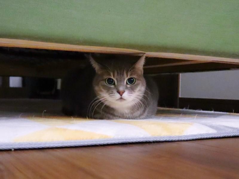 狭い場所にたたずむ猫