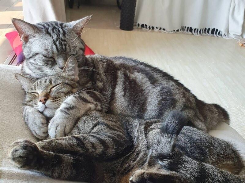 くっつく2匹の猫