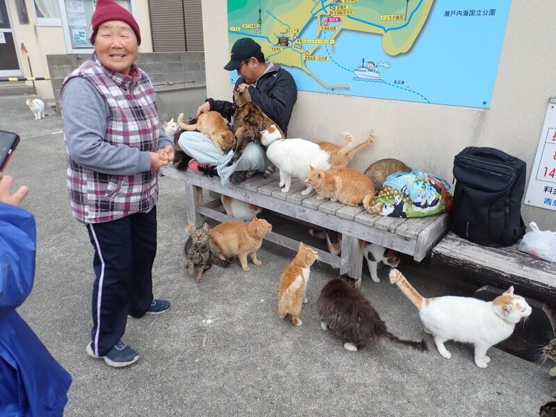 青島の住民の女性と猫