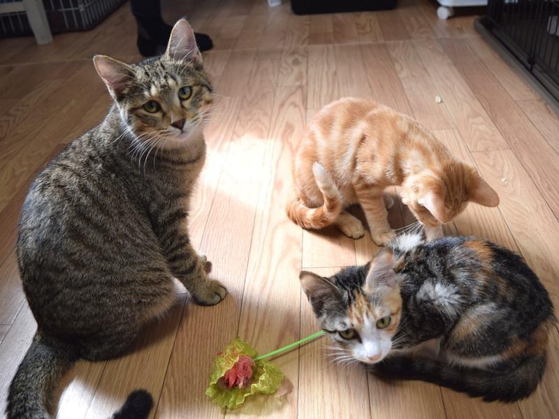 猫舎でくつろぐ保護猫たち。子猫が多い