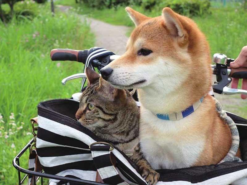 の て 猫 思っ を ちゃん こと だ 柴犬 自分 いる と
