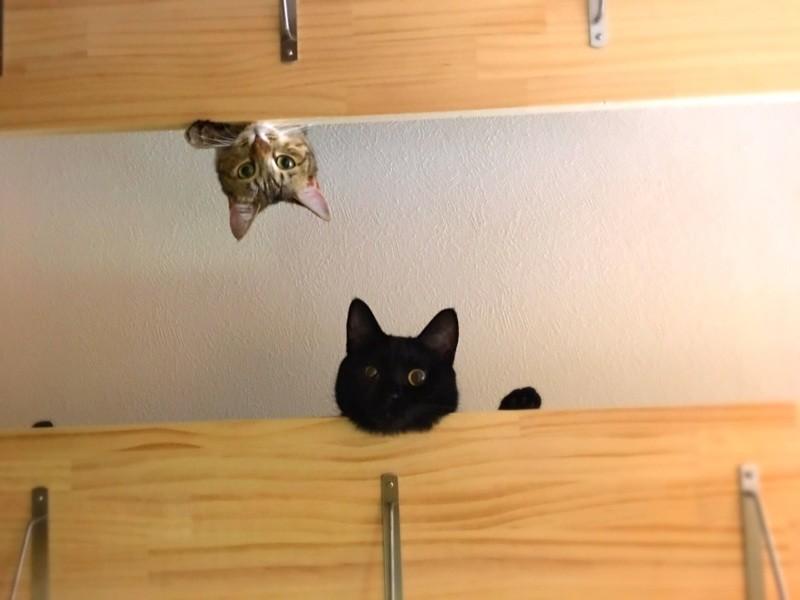 上からのぞく2匹の猫