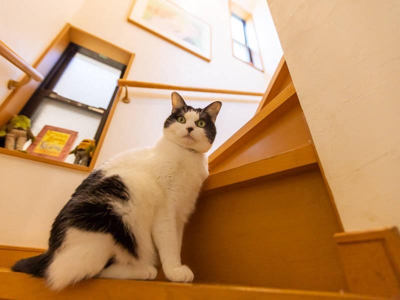 白黒猫「七味」