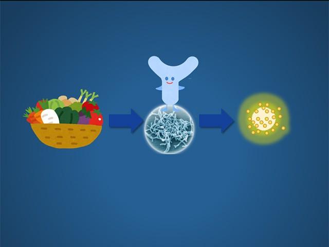 短鎖脂肪酸に注目!不足すると腸内環境が悪化