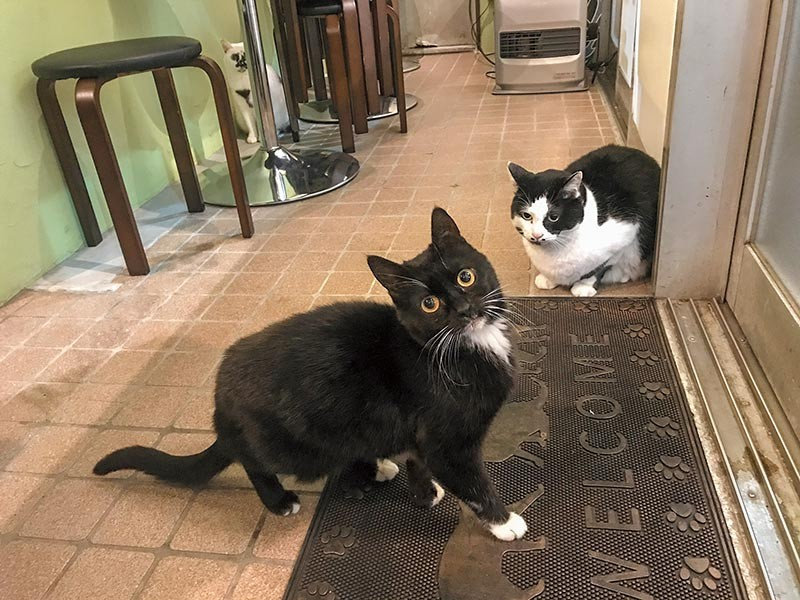 白黒猫「タビ子」と「てんてん」