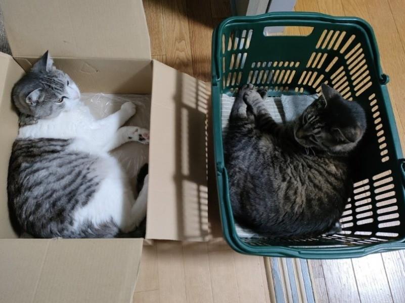 箱や籠に入る猫たち