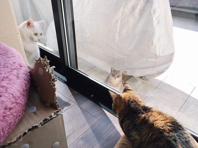 室内の猫2匹と屋外の猫1匹