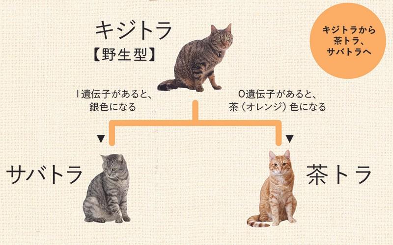 https://p.potaufeu.asahi.com/3aff-p/picture/13972454/d00c2d3b921d6148a7249f5cd226719b.jpg