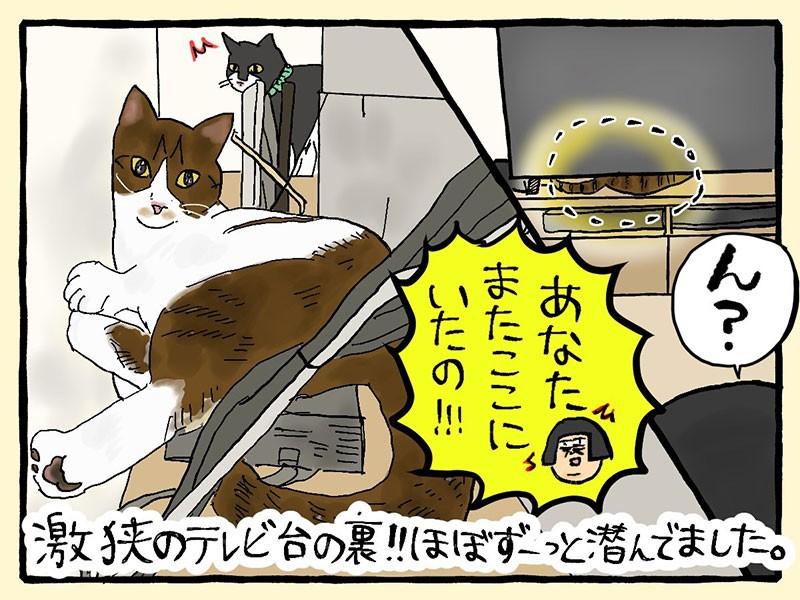 大盛のぞみ猫マンガ「やっぱ、猫じゃけぇ」4コマ目