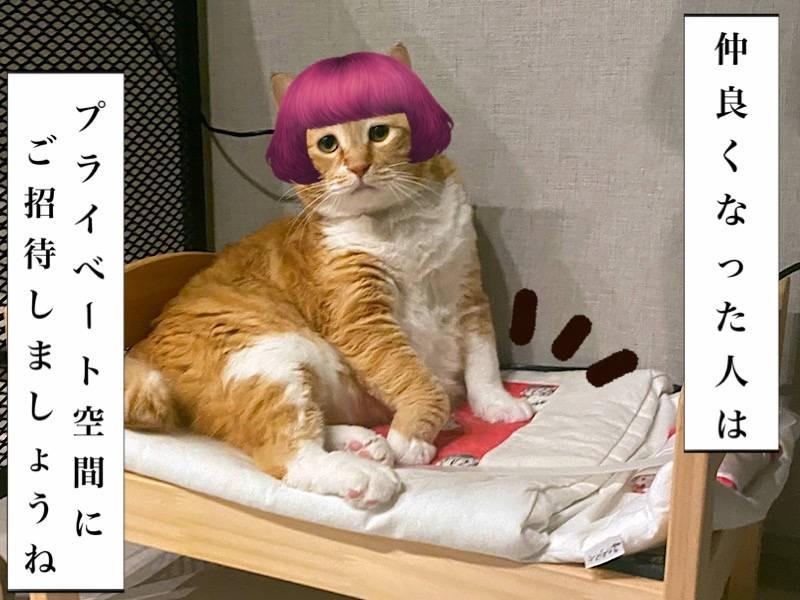 お太りさま猫ぐっぴー写真マンガ「ぐっぴーのたぷたぷ日記」6コマ目