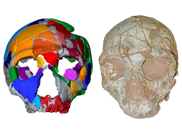 An undated combo image provided by Katerina Harvati, Eberhard Karls University of Tübingen shows the Apidima 2 cranium, right, which consists 66 fragments from an individual's face and was shown to be a Neanderthal skull, and its reconstruction, left. Another skull fragment found in the roof of a cave in southern Greece is the oldest fossil of Homo sapiens ever discovered in Europe, scientists reported on Wednesday, July 10, 2019. (Katerina Harvati, Eberhard Karls University of Tübingen via The New York Times) -- NO SALES; FOR EDITORIAL USE ONLY WITH NYT STORY SCI HUMAN FOSSIL BY CARL ZIMMER FOR JULY 10, 2019. ALL OTHER USE PROHIBITED. --