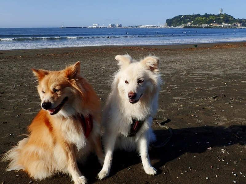 雑種犬と海