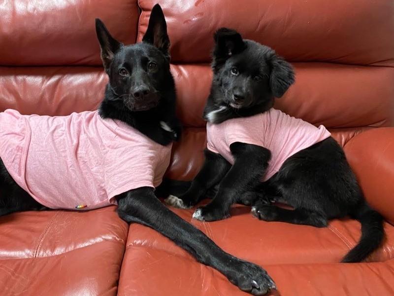 2匹の黒い犬