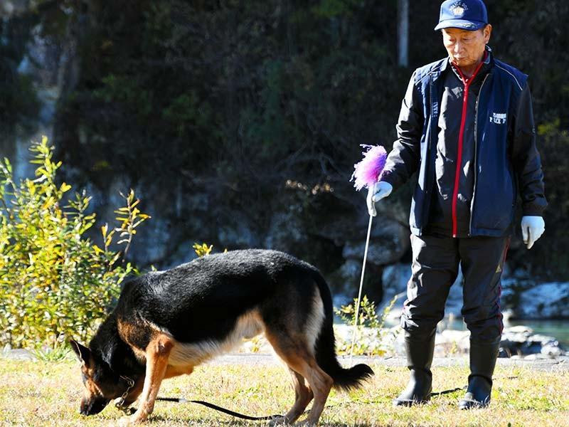 足跡追及の訓練をするオルトと指導手の東山勲さん=白山市鶴来水戸町