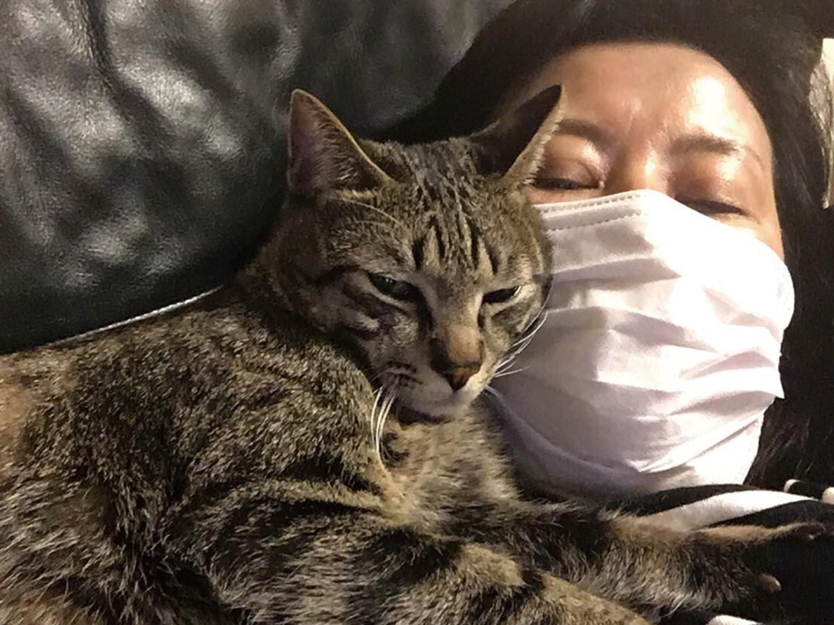 猫 アレルギー 治療