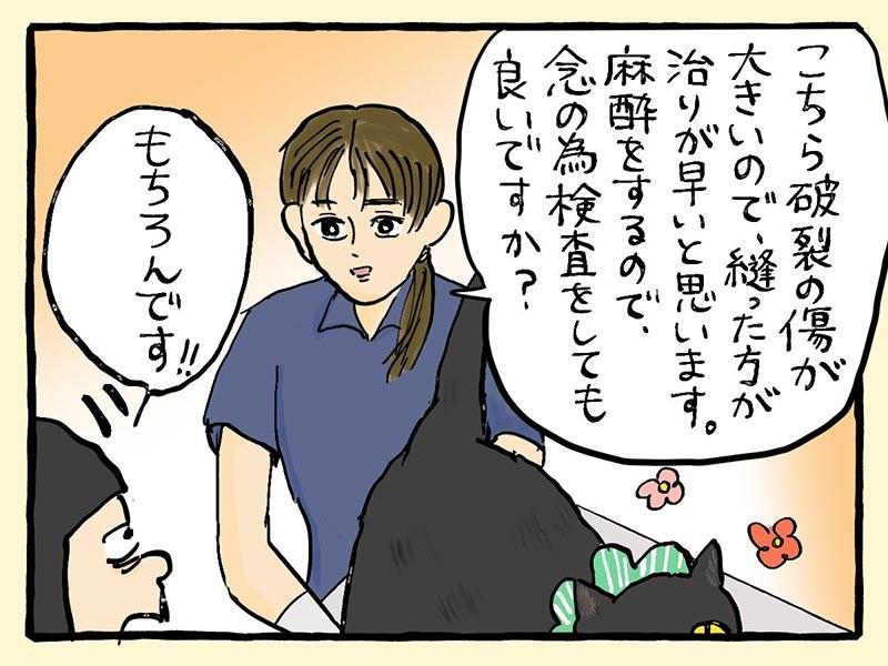 大盛のぞみ猫マンガ「やっぱ、猫じゃけぇ」①コマ目