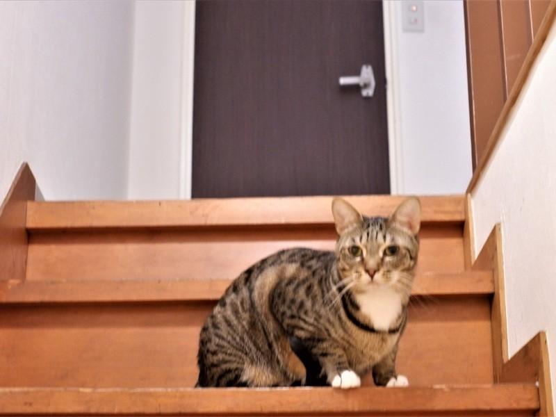 階段にいる猫