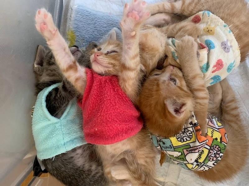 団子になっている子猫たち