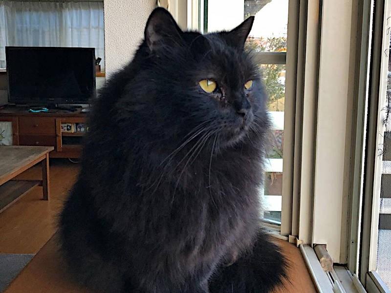 黒猫、西山ごえもんくん