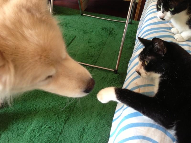 大型犬と猫