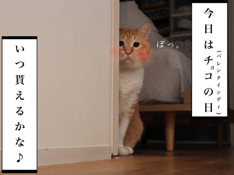 猫写真マンガ「ぐっぴーのたぷたぷ日記」1