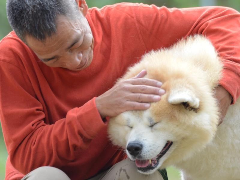男性と秋田犬