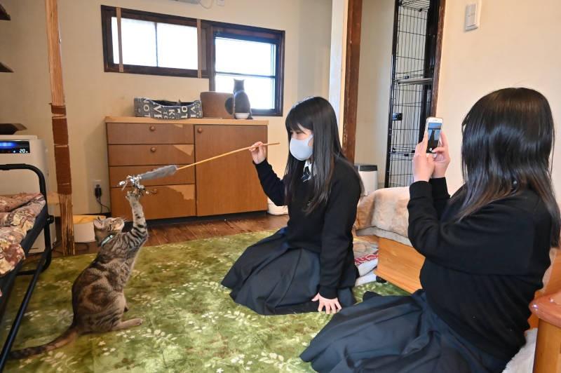 猫と遊ぶ女子高校生たち